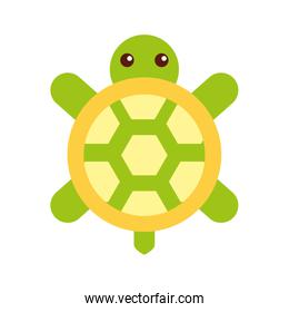 cute turtle isolated icon