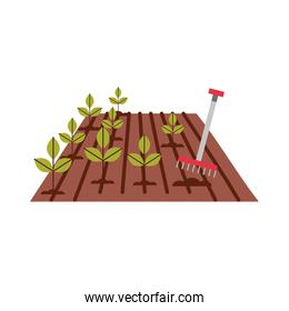 Cultivated plant with rake