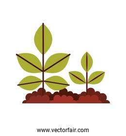 Cultivated plant isolated icon