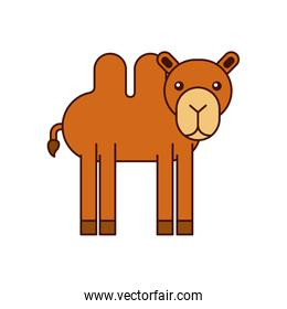 african camel isolated icon