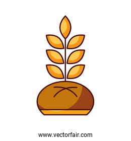bread and wheat bakery pastry product food fresh