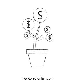 dollar coin money plant inside pot finance