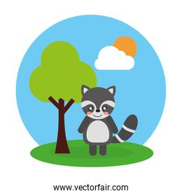 cute animal raccoon tree and sky landscape