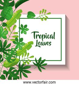 tropical leaves greeting card natural foliage frond decoration