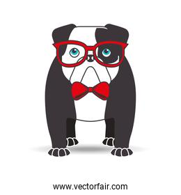 bulldog with glasses red bow