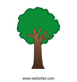 large green tree isolated icon