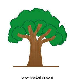 large green tree isolated icon design