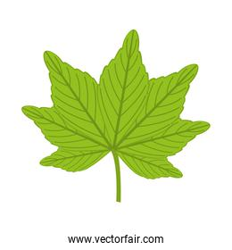 plant leaves isolated icon design