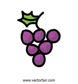 fresh grapes isolated icon design