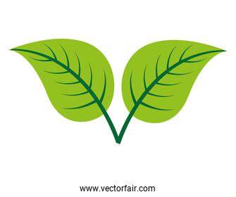 leafs plant  isolated icon design