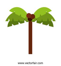tree palm isolated icon design
