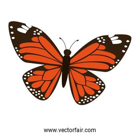 Beautiful and colorful butterfly isolated icon design