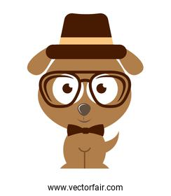 dog character hipster style isolated icon design