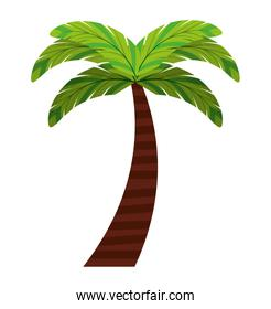leafs natural palm tropical icon