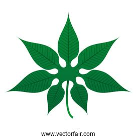 leafs plant decoration isolated icon
