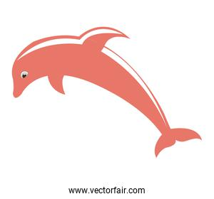 dolphyn pink fish isolated