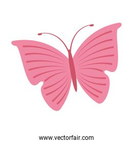 cute butterfly pink icon