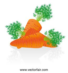 group of carrots issolated over white background