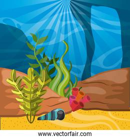 coral, shell and algae icon. Sea life design. Vector graphic