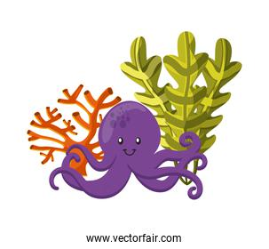 octopus, coral and algae icon. Sea life design. Vector graphic