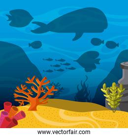 k icon. Sea life design. Vector graphic