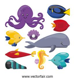 fish oyster octopus whale shell and sea horse icon. Vector graph
