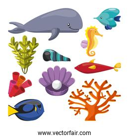 algae coral fish oyster whale shell and sea horse icon. Vector g