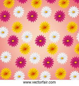 seamless pattern pink yellow and white daisies flower