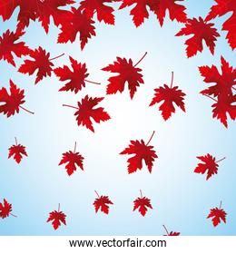falling red maple leaves background