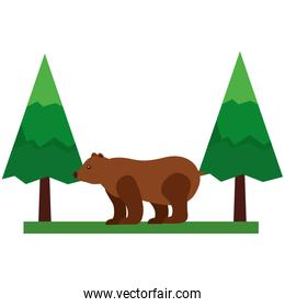 grizzly bear in pine forest scene