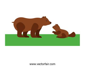 grizzly bear and beaver