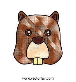 beaver head animal rodent image
