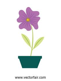 flower periwinkle in a pot decorative