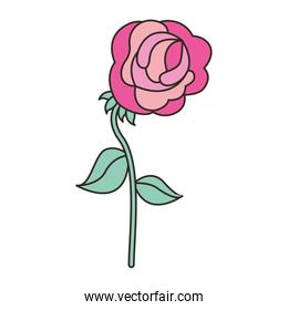 flower in the form of rose
