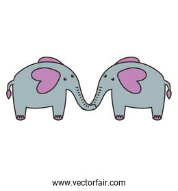 cute elephant animal couple