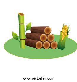 wooden trunks with sugar cane and corn