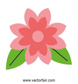 flower petals and leaves white background
