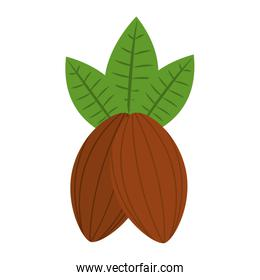cocoa beans leaves fruit image