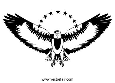 american bald eagle with stars