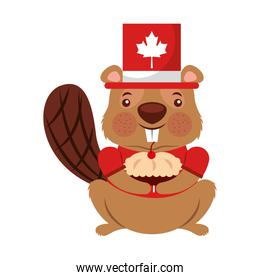 beaver of canada with hat and cup cake isolated icon