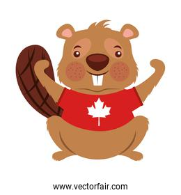 beaver of canada with shirt isolated icon