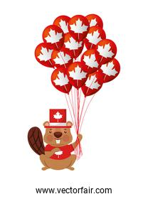 beaver of canada with balloon helium isolated icon
