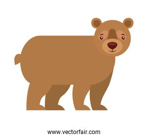grizzly bear animal wildlife isolated icon