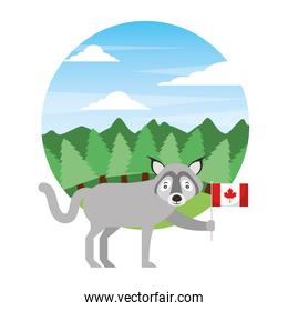 wolf holding canadian flag in forest