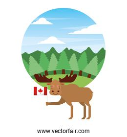 moose holding canadian flag in forest
