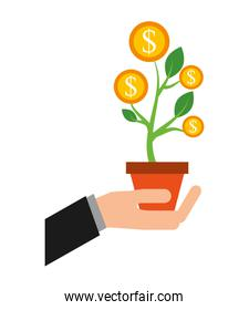 hand with plant of coins dollar isolated icon