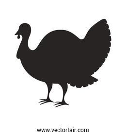 silhouette turkey on white background