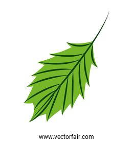 green leaf nature on white background