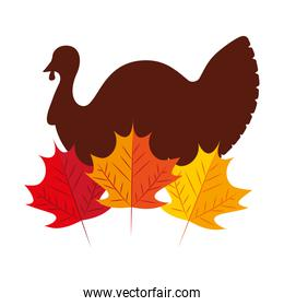turkey bird with autumn leaves natural
