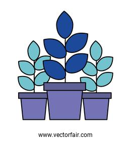 three potted plants on white background